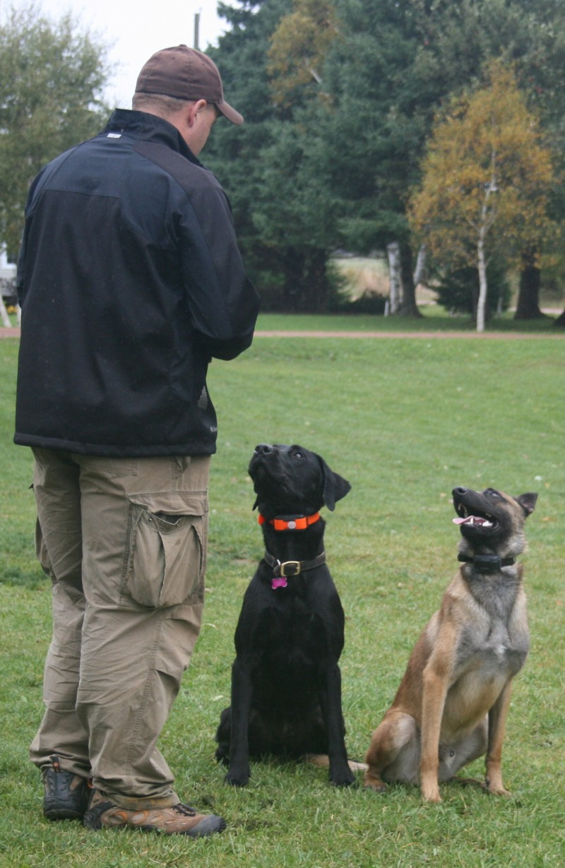 Dog shock collar training by Unleashed Potential