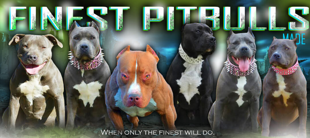 Talking XXL Pitbulls & Bully Dog Breeding With FPM Kennels