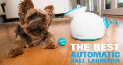 Review: iFetch, The Best Automatic Ball Launcher For Dogs