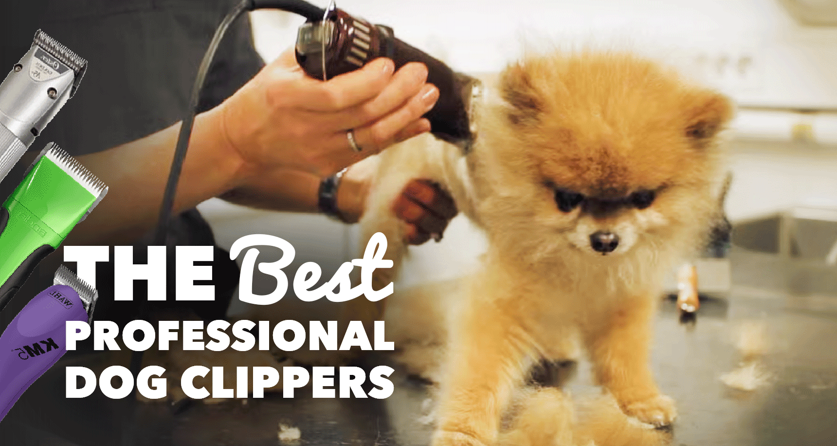 6 Best Dog Clippers For Professionals 2018 Buying Guide