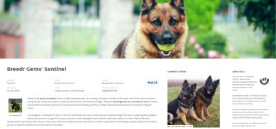 demo dog breeder wordpress plugin