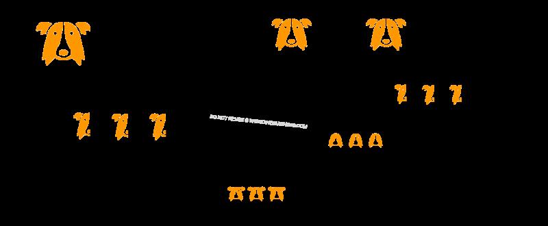f2b hybrid backbred dog