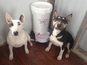 Large Dog Water Dispenser