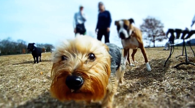 Dog Action Cameras (Sony Action Cam, Gopro)