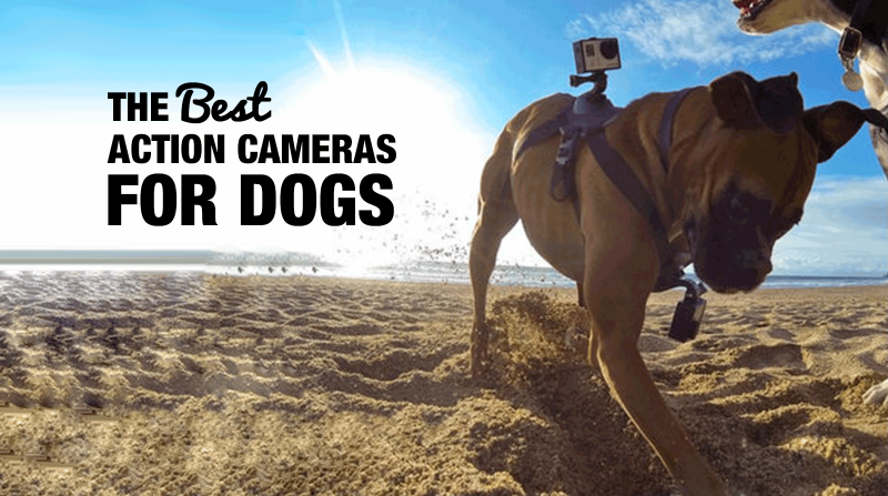 Best Action Cam For Dogs (GoPro)
