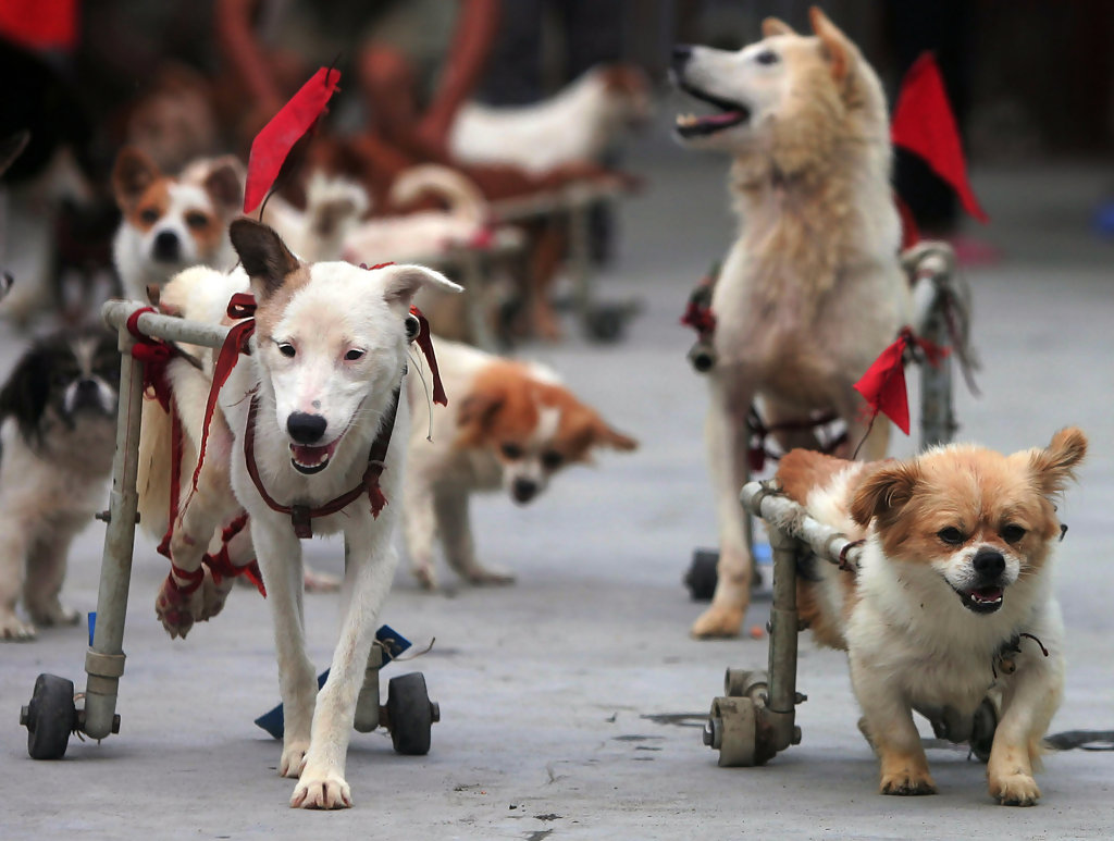 disabled dogs marathon