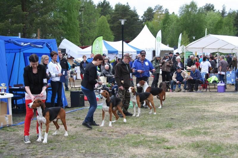 local dog show
