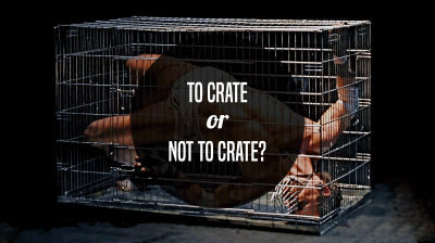 dog crate training human cruelty