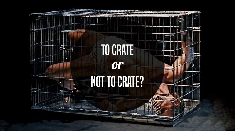 dog crate training human cruelty