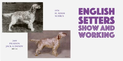 English Setters: Show & Working Types