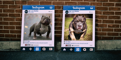 Increase Your Bully Kennel's Instagram Followers With These Tips