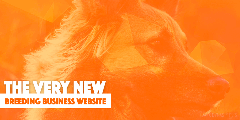 the new dog breeding business website
