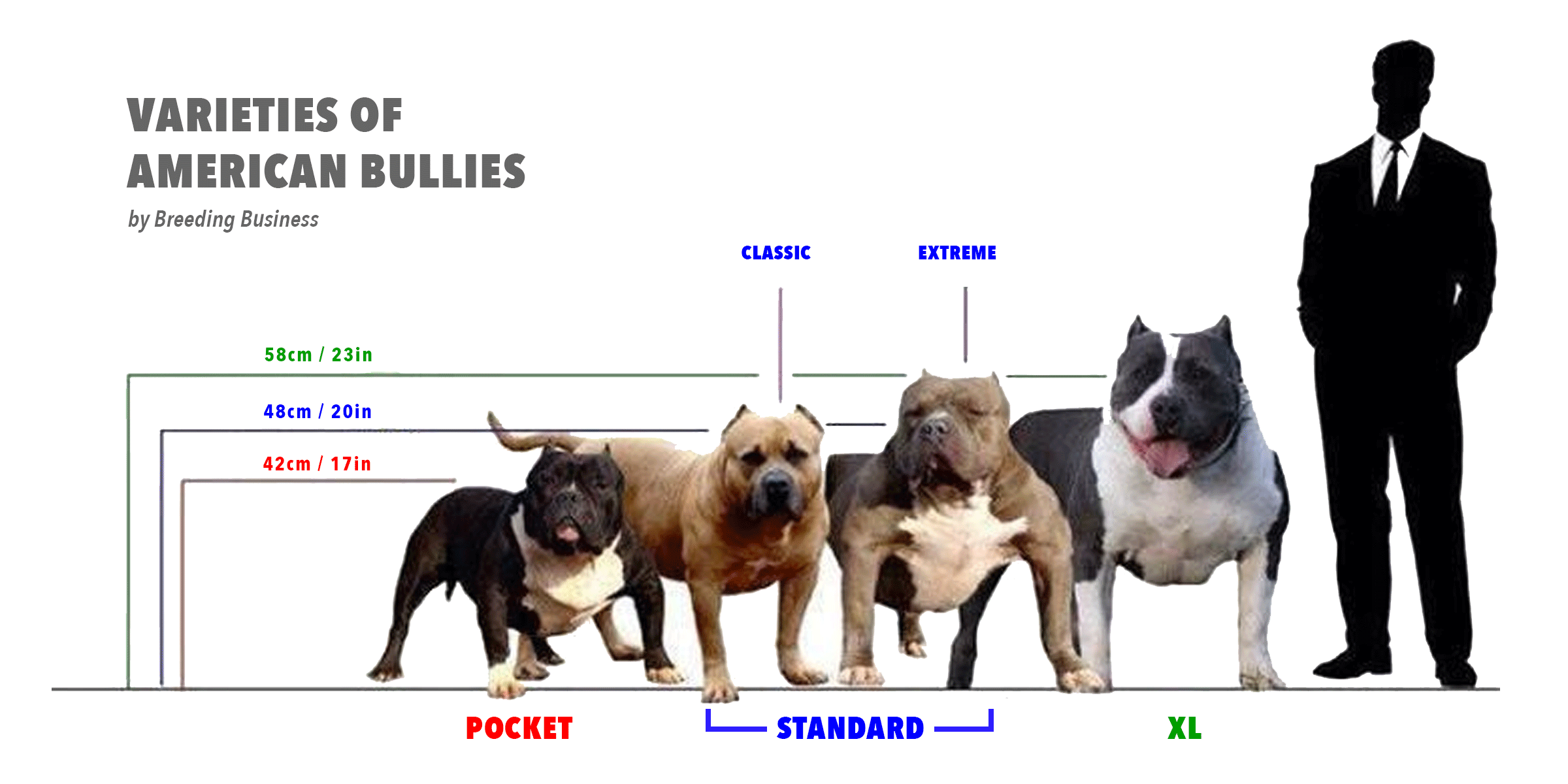 Bully Pitbull Size Chart - What is the difference between ...