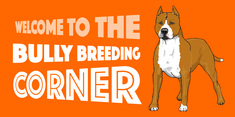 welcome to all bully breeders and fanciers