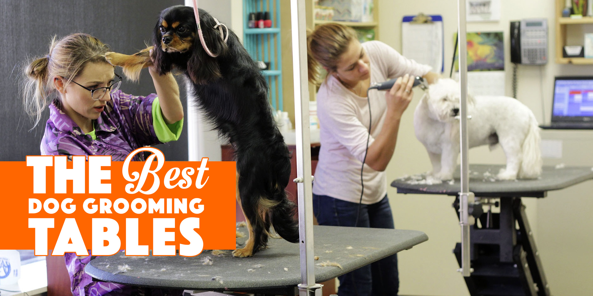 Top 5 Best Dog Grooming Tables — Foldable Electric & Hydraulic