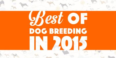 Best of dog breeding in 2015