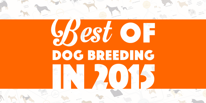 Best of dog breeding in 2015