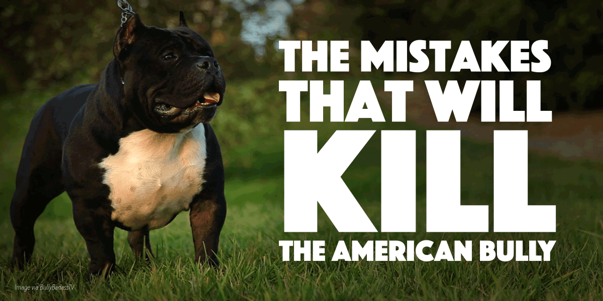 3 Bully Breeding Mistakes That Will Kill The Breed