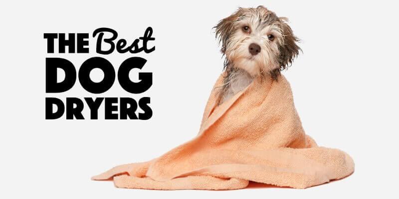 Best Dog Dryer Reviews