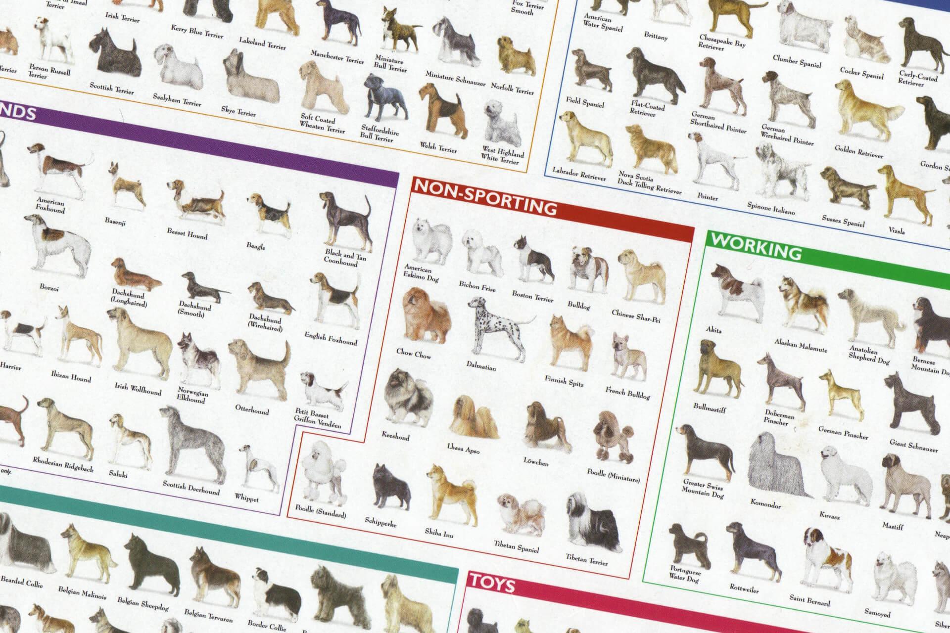 Crossbred vs Purebred Dogs — The Ever-Lasting Battle