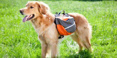 3 Best Dog Backpacks and Rucksacks For Hiking!