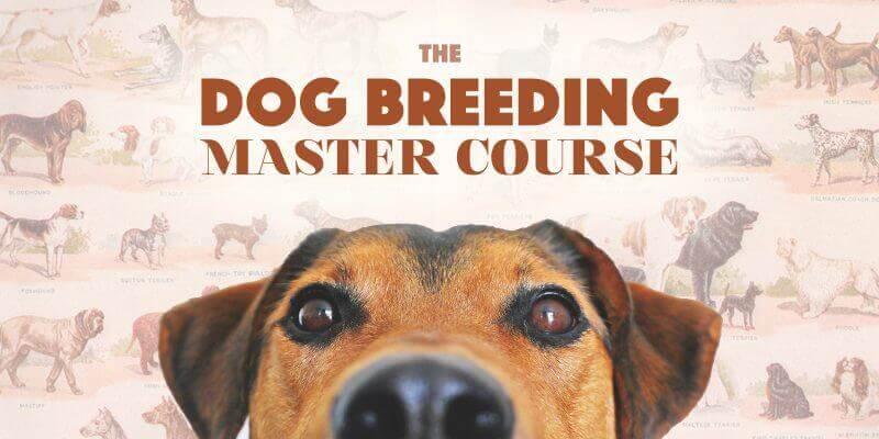dog breeding course