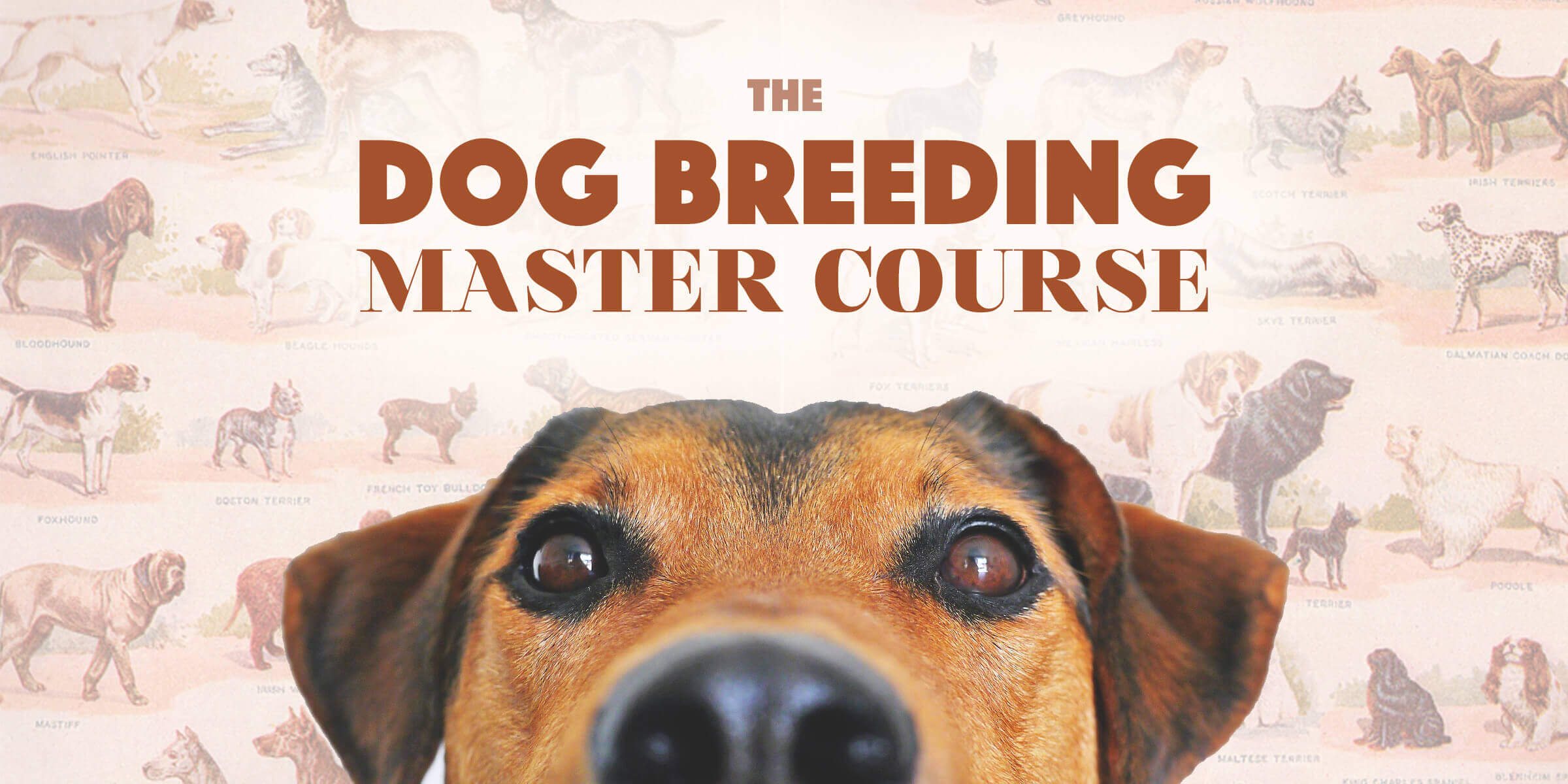 Dog Breeding Training Courses