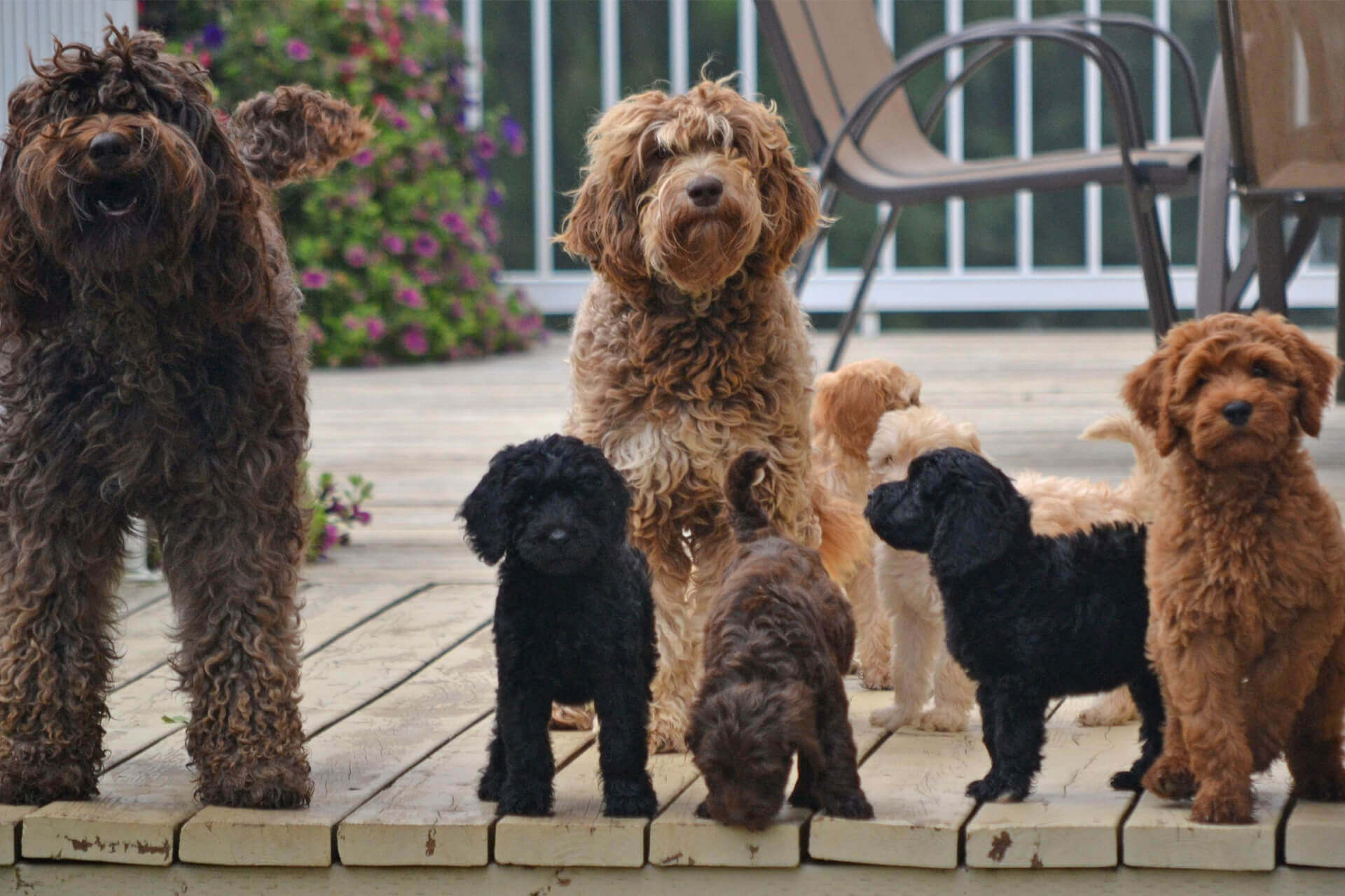 Mixed-breed Dogs: The Naming Nomenclature