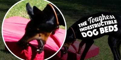 5 Best Indestructible Dog Beds (+ The Kong Dog Bed)
