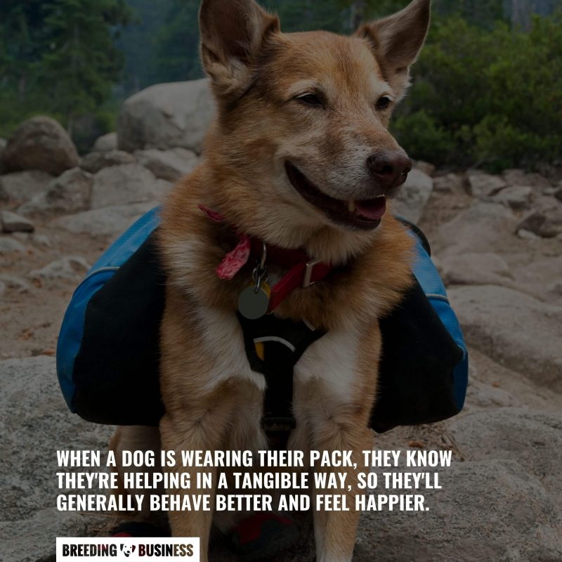 significance of dog backpacks