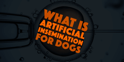 What is Artificial Insemination For Dogs