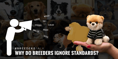 dog breeders kennel club standards