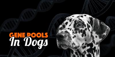 Gene Pool In Dogs — What Is It? Does It Matter?