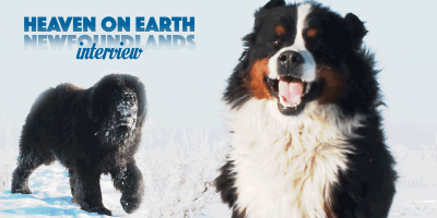 Interview: Christy From Heaven On Earth Newfoundlands
