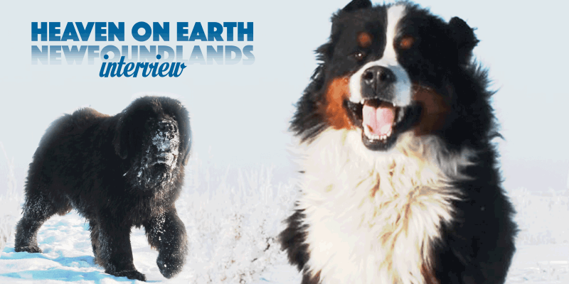 Christy From Heaven On Earth Newfoundlands