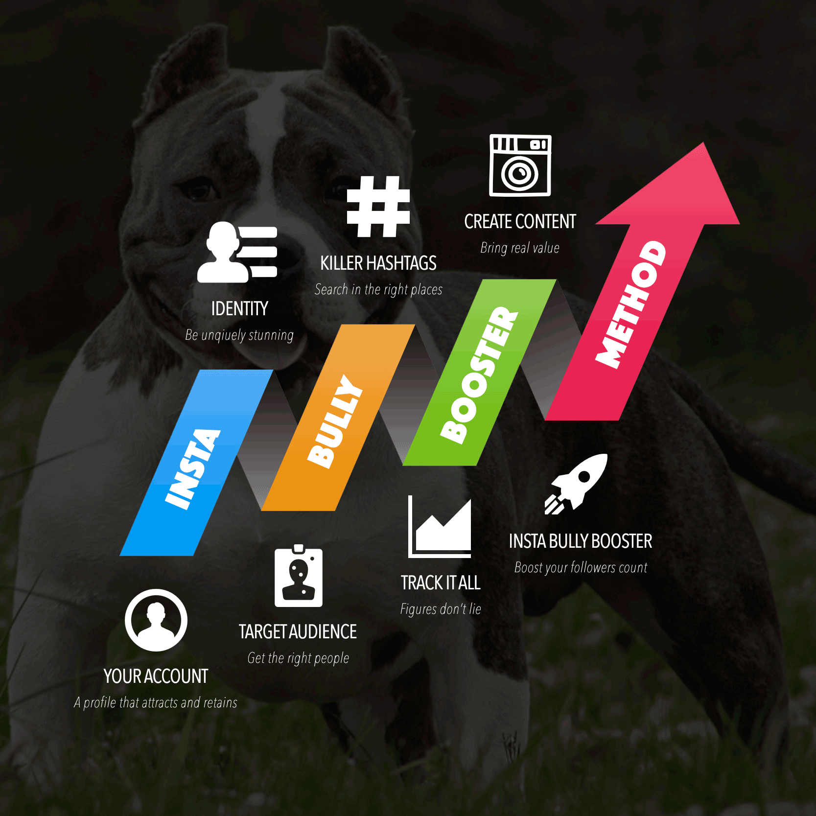 infographics insta bully booster