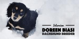 Dachshund Interview Doreen Biasi From AKCDachshundNY