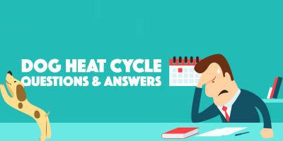 Dog Heat Cycle — Frequently Asked Questions