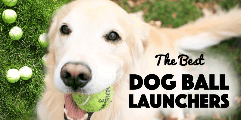 Dog Ball Launchers — Automatic vs. Manual Throwers
