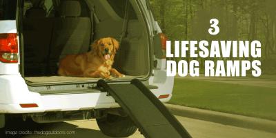 6 Best Dog Ramps – Folding, Telescoping & More
