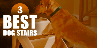 5 Best Dog Stairs — Buying Guide & Reviews Of Steps For Dogs