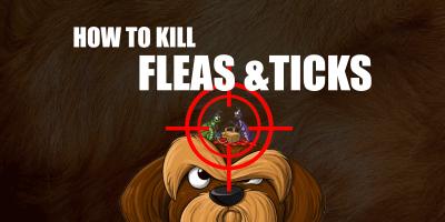 6 Best Tick & Flea Treatments For Dogs — Spray, Spot-on, Tablets, Foggers…