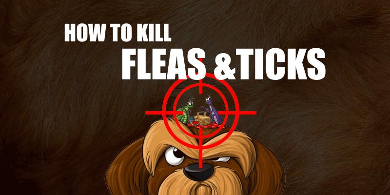 flea treatment for dogs