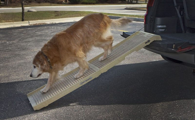 dog ramps for labradors