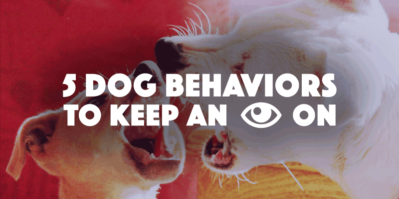5 Dog Behaviors You Should Keep An Eye On