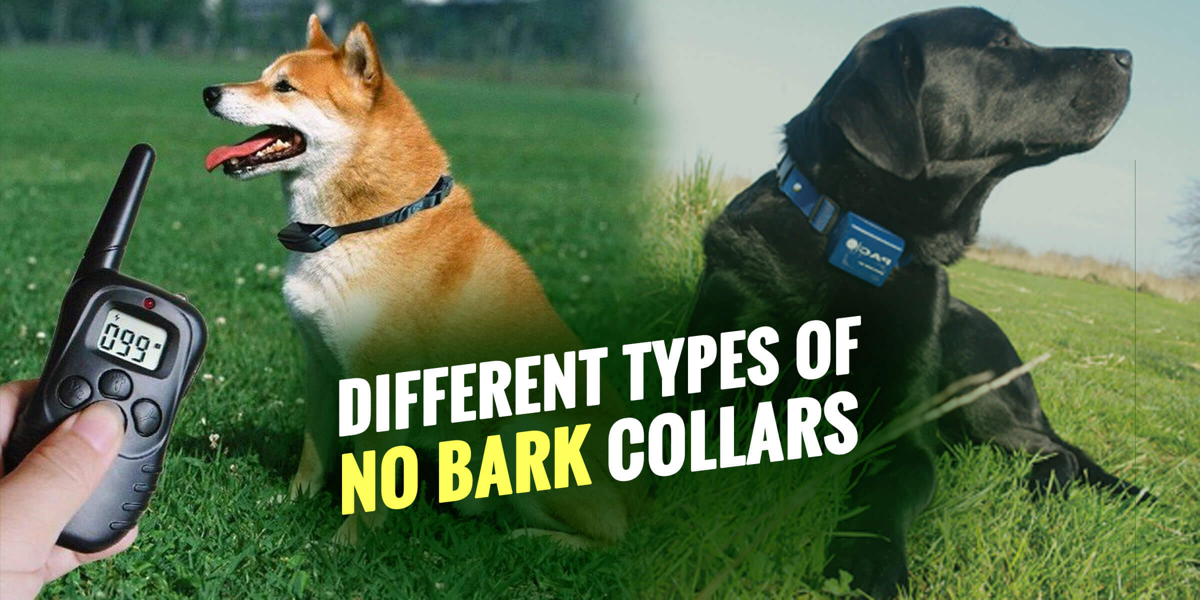Top 6 Best No Bark Collars For Dogs That Are Humane