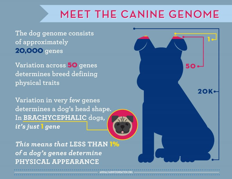 what is the dog genome