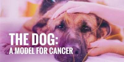 Man's Best Friend, The Dog: A Model for Cancer