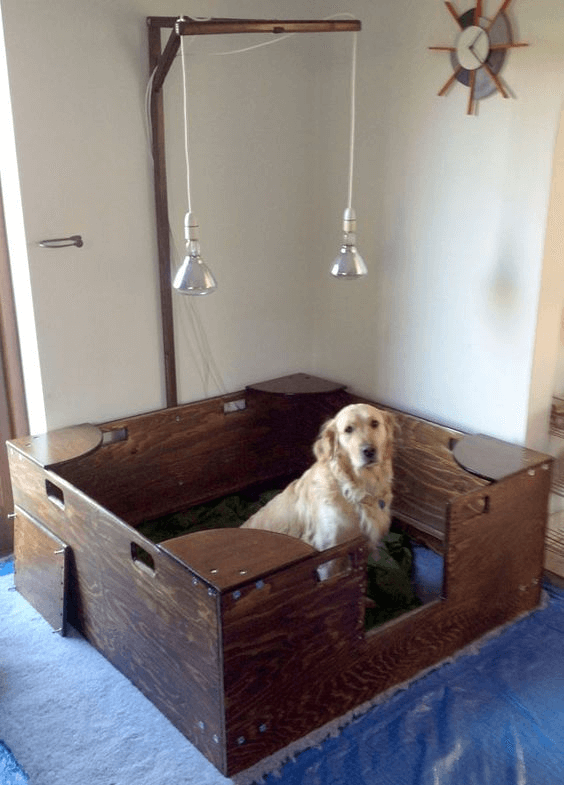 5 essential tips for a nice whelping box for Building a dog kennel business
