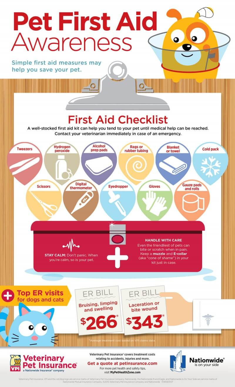 dog first aid infographic